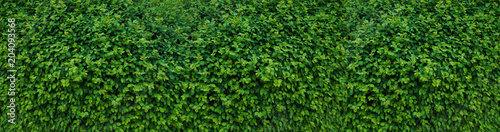 Panorama with leaves. Decorative wall with green leaves. - 204093568