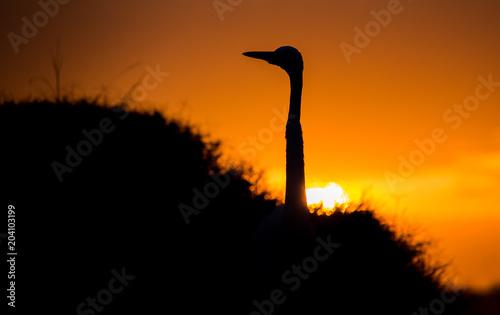 Aluminium Oranje eclat Silhouette of bird at sunrise