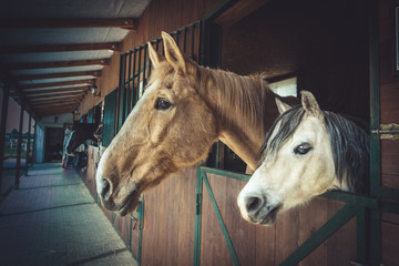 Two horses at stables