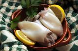 Sepiidae Sepia officinalis Cuttlefish Seppia 갑오징어과 墨斗魚  - 204112121
