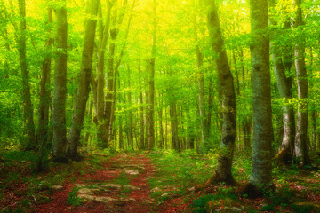 colorful forest with beautiful light