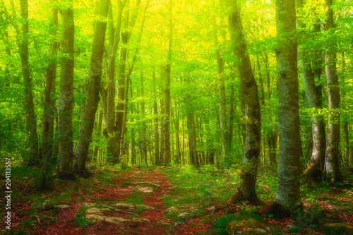 Fototapeta colorful forest with beautiful light