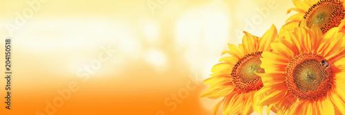 Leinwanddruck Bild Wunderschöne Sonnenblume mit einer Biene
