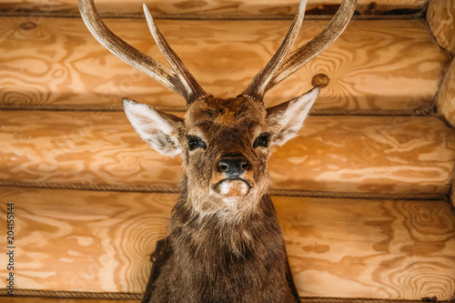Aluminium Hert Brown deer head on wooden wall background. Animals draft or trophy decorative object. Taxidermy