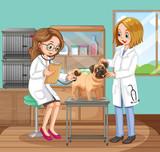 Veterinarian Doctors Helping a Dog - 204162382