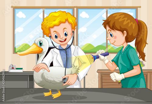 Plexiglas Kids Vets examining health of a duck