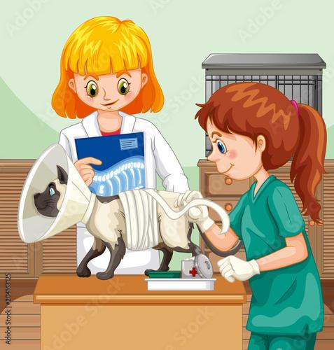 Plexiglas Kids Veterinarian Doctor Helping a Cat