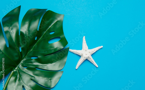 starfish and palm leaf. Objects isolated on blue background
