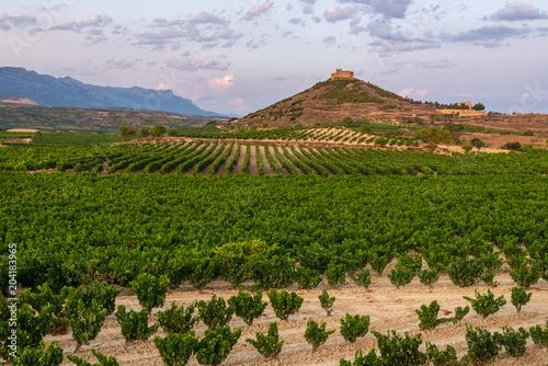 Fotobehang Wijngaard Vineyard with Davaillo castle as background, La Rioja, Spain