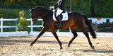 Brown horse in portraits during a dressage competition, photographed in the suspended phase with the leg extended..