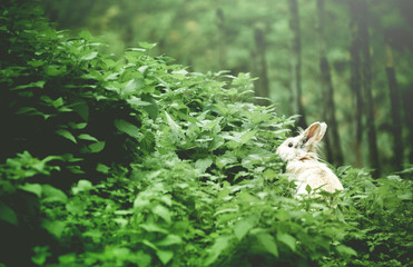 White Bunny in the Frest.