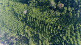 Aerial rainforest in south of Thailand