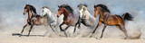 Fototapeta Zwierzęta - Horses run fast in sand against dramatic sky © callipso88