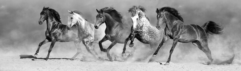 Horses run fast in sand against dramatic sky. Black and white