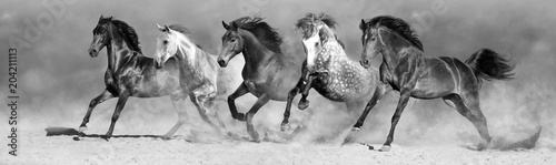 Naklejka Horses run fast in sand against dramatic sky. Black  and white