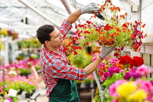 Gärtner arbeitet in einem Gewächshaus mit vielen bunten Blumen - Blumenhandel // Gardener works in a greenhouse with many colorful flowers - flower trade