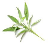 fresh herb, fresh sage isolated on white - 204225586