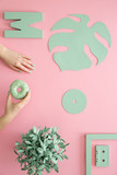 Mint on pink background - 204234177