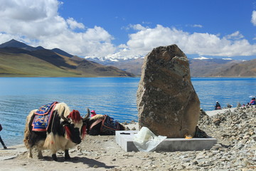 yak and lake © dirk