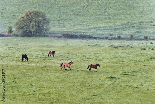Plexiglas Paarden Horses on pasture