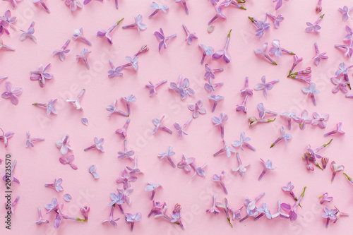 Foto Murales beautiful lilac purple petals flowers on pink background, flat lay with space for text. modern image. top view. stylish floral wallpaper concept. mothers or womens day
