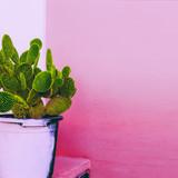Cactus. Cactus Garden.  Plants on pink content - 204236323