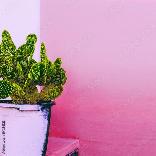 Kaktus. Cactus Garden. Rośliny o różowej zawartości