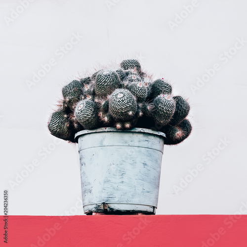 Miłośnik kaktusa. trend kaktusowy. Minimalny projekt