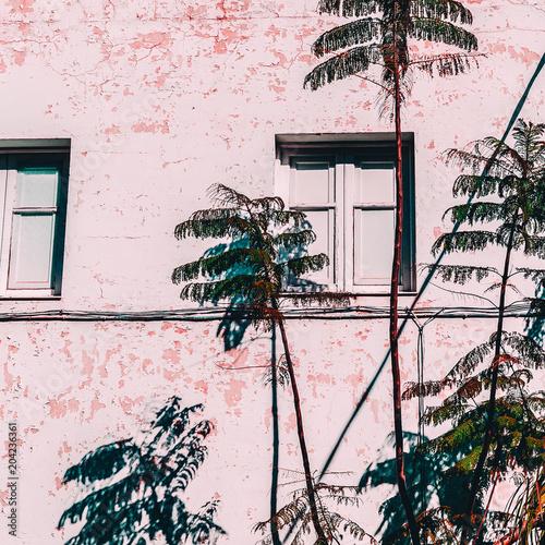 Tropcal urban life. Palm location. Minimal fashion mood - 204236361