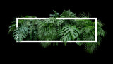 Tropical leaves foliage jungle plant bush nature backdrop with white frame on black background. - 204237584