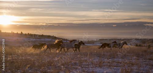Mustangs Running at Sunset