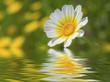 flor reflejada en el agua