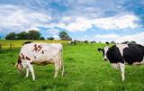 Artgerechte Tierhaltung  - 204262954