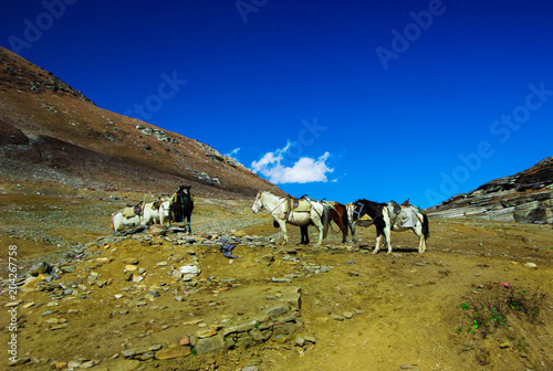 Plexiglas Paarden black and white horses at rohtang pass, manali tourism, India