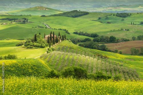 Plexiglas Pistache Tuscany spring landscape, Val d'Orcia, Italy