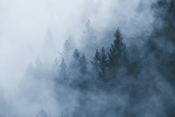 Fantasy foggy forest landscape in the morning fog. Picture was taken in Slovenia, EU. © robsonphoto