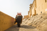 A decorated elephant is walking to Amber Fort in Jaipur, India. Elephant rides are popular tourist attraction in Amber Fort. - 204294996