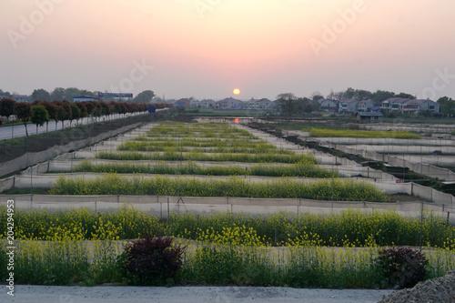 Plexiglas Beige Dongting raw frog farm.