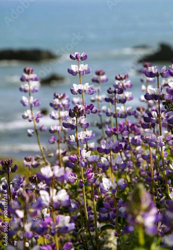 Aluminium Lavendel Lupine Flower