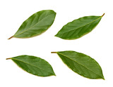 Fresh green bay leaf set isolated on white background - 204328343