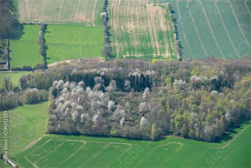 Plexiglas Olijf vue aérienne d'arbres en fleurs à Le Mesnil Théribus dans l'Oise en france