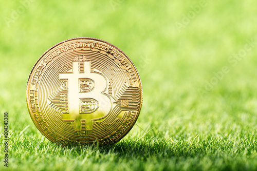 Fototapeta Golden coin of Bitcoin on green grass background