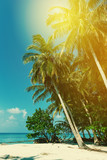 Coconut palm trees on sea view - 204343946