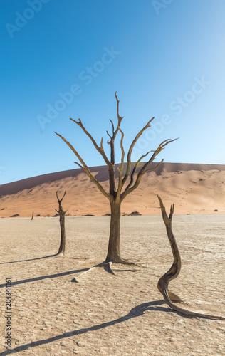 Plexiglas Beige Bäume im Deadvlei, Tsauchabtal, Hardap, Namibia