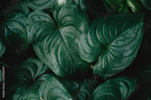 Closeup of green tropical plants