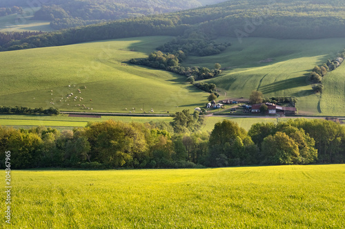Plexiglas Pistache Morning spring landscape with green pastures, village and cows