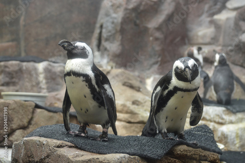 Fotobehang Pinguin Penguins