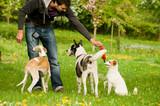 Mann spielt mit Hunden