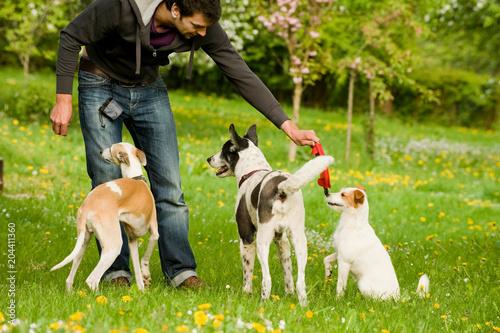 Fototapeta Mann spielt mit Hunden