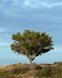 isolate tree
